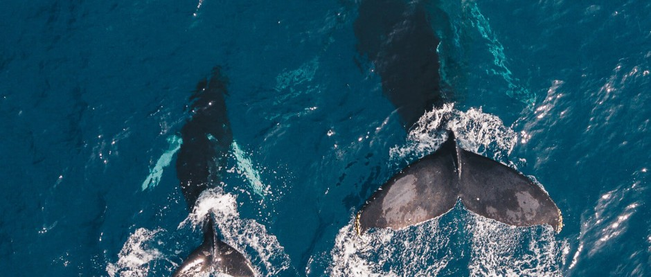 whale calf and his mom